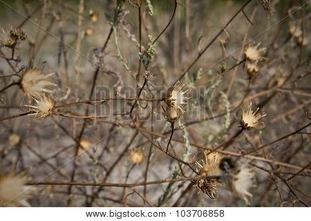 dry steppe grass