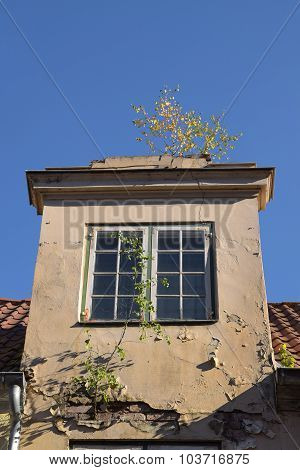 Nature Conquered A House In The Old Town, Dormer With Window