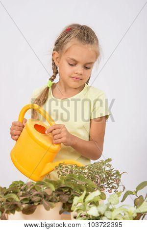 Six-year Girl Watering Flowers Watering