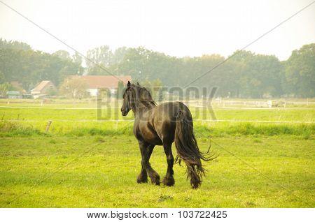 Horse runs across the field
