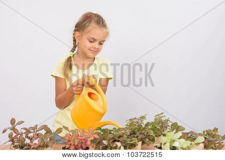 Six Year Old Girl Caring For Potted Flowers