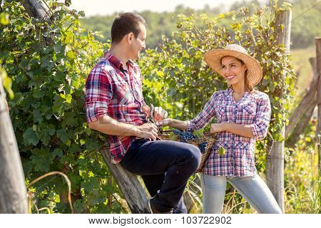 young couple flirting during the grape harvest