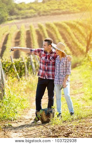 Couple farmer standing between rows of vines and  watches own vineyard