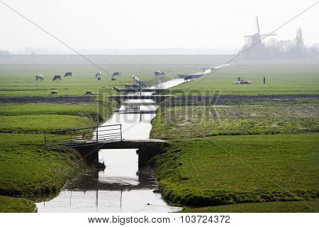 Typical Dutch Polder Landscape