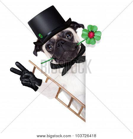 New Years Eve Dog
