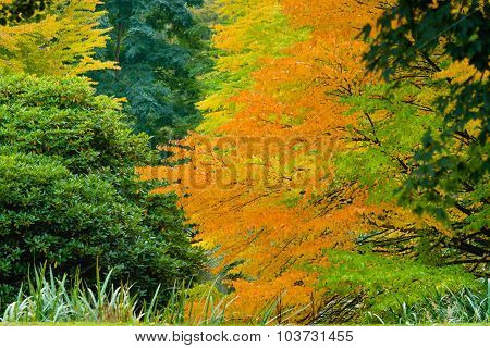 Orange Fall Canopy