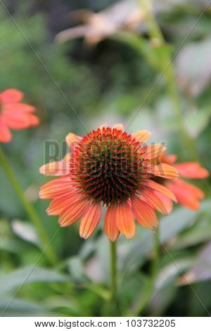 Beautiful flower in landscaped garden
