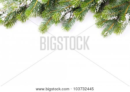 Christmas tree branch with snow. Isolated on white background with copy space