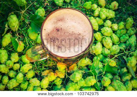 Top View Pint Beer Background Hop Cones