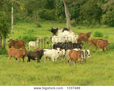 Cow In A Jungle