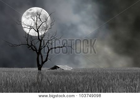 Super Moon And Barren Tree With Hut In Night- Halloween Festival