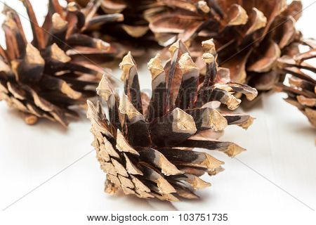 Group Of  Pine Cones