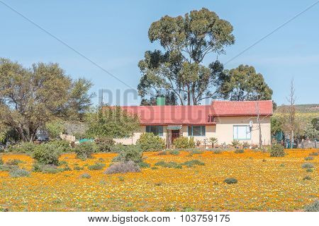 Farm House In A Sea Of Wild Flowers