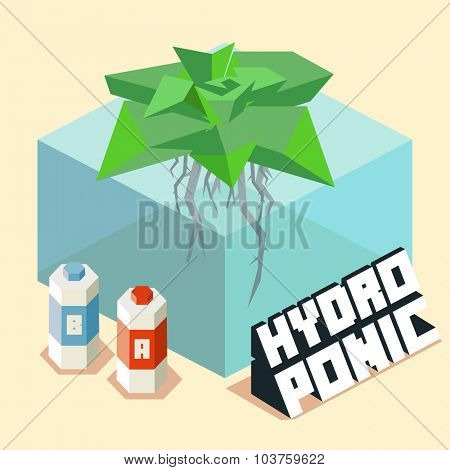 hydroponic for home gardening. Isometric vector illustration