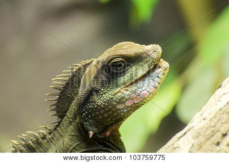 Closeup Of Lizard
