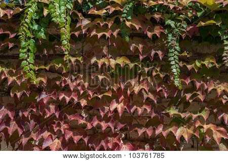 Autumn Background - Bright Leaves
