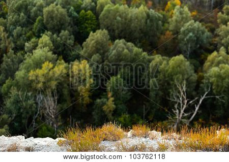 Autumn Larch Tree Forest. High Altitude  Beautiful Landscape.