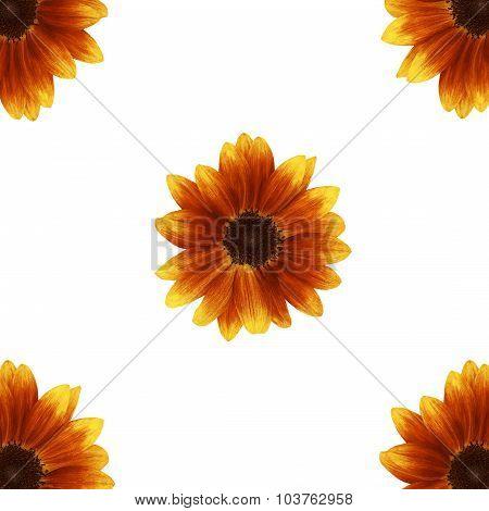 Orange gerber isolated on white background