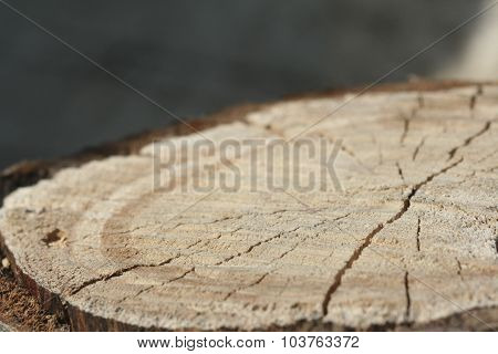 stump of tree felled