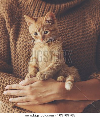 Cute ginger kitten sitting on his owner's hands in warm sweater