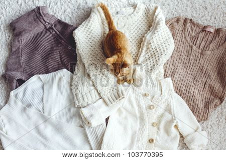 Knitwear closeup, cat sitting on sweaters top view, pastel colors.