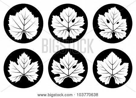 Grapevine Leaves