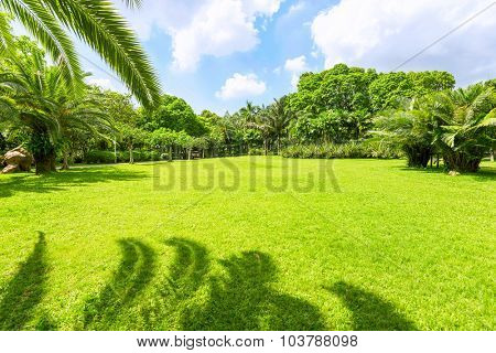 a park with greenland under palm tree leaves