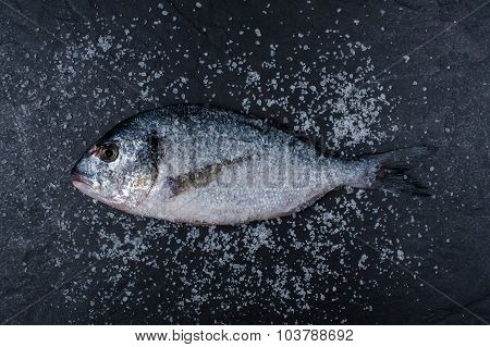 Salt Dorada On The Dark Stone Table