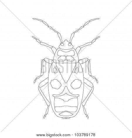Pyrrhocoris Apterus. Beetle. Bug-soldier. Sketch Of Beetle. Beetle Isolated On White Background. Bee