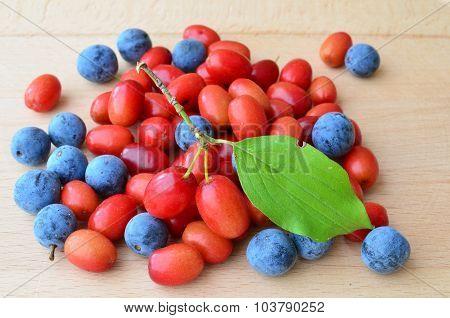 Cornelian Cherries And Sloes