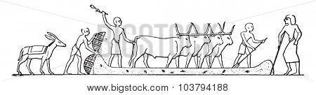 Threshing Egypt, vintage engraved illustration.