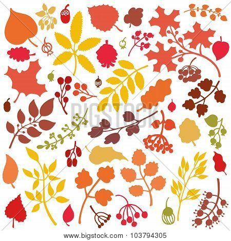 Autumn leaves,branches,berries set.Fall silhouette.Colors