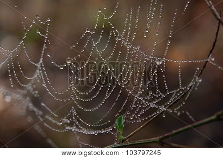 Morning spider's web.