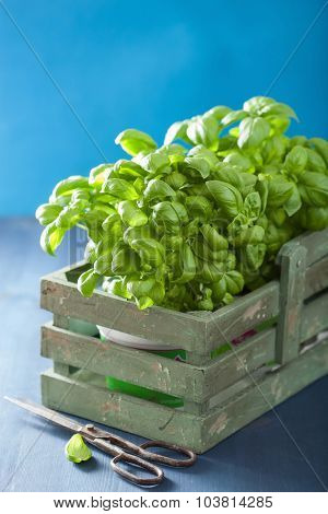 fresh basil herb in rustic box