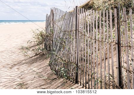 Beach Grass and Dunes with Pickett Fence