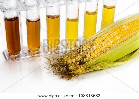 Corn Generated Ethanol Biofuel With Test Tubes On White Background.
