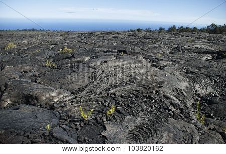 Hawaiian Lava Fields