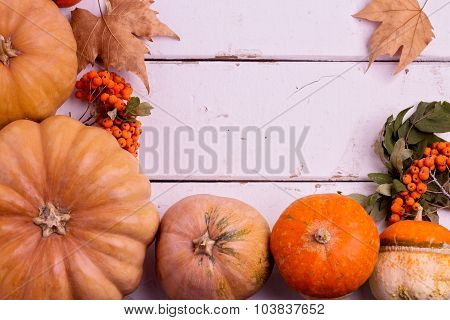 Autumn Still Life. Pumpkins For Halloween And Thanksgiving Day.