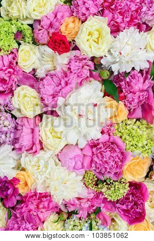 Colorful spring flowers. Beautiful background with flowers
