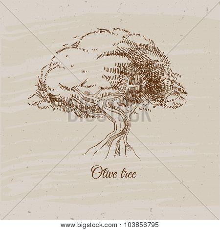 olive tree, vintage sketch