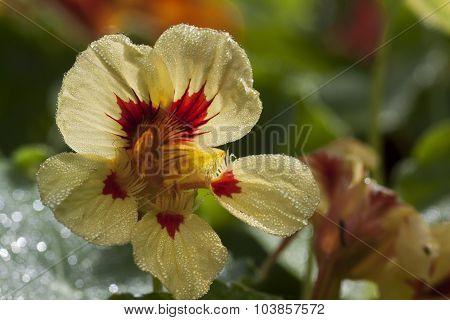 cress flower