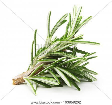 Rosemary twig isolated on a white background