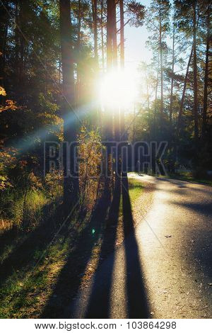 A Man Walking Along The Road With The Rays Of The Sun Through The Autumn Forest With Shadows