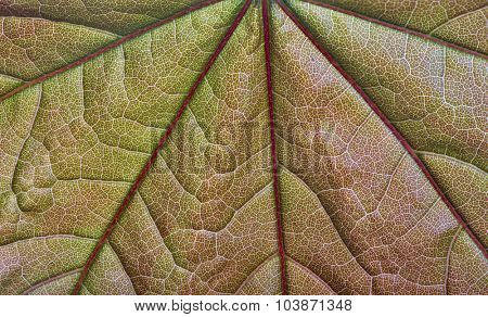 macro photo of green and red leaf