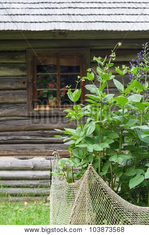Flowerbed And Wooden Log House On Background