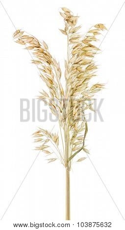 bunch of dry oats on white background