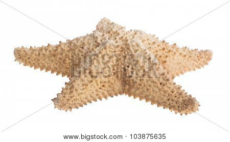 beige large starfish isolated on white background