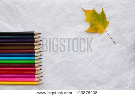 Colored Pencils And Yellow Maple Leaf