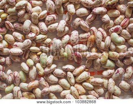 Crimson Beans Vegetables Background
