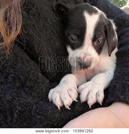 Shy puppy in somebody's arms